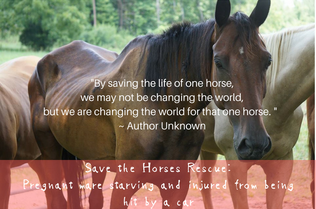 Save the Horses |Welcome horse lovers!